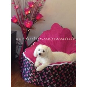 Pink Daisies Bean Bag Chair with Harness